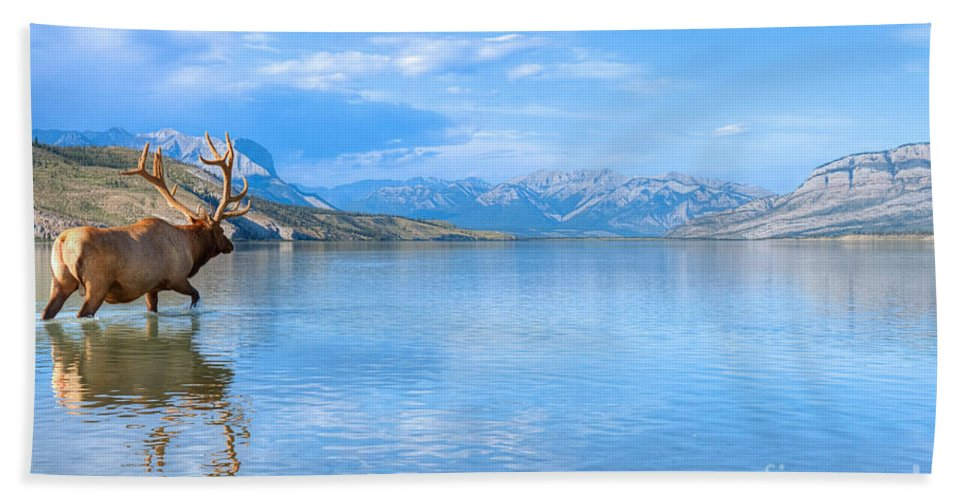 Elk Bull Beach Towel featuring the photograph Into The Wild Blue Yonder by James Anderson