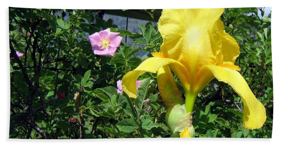Iris Beach Towel featuring the photograph Iris And Wild Roses by Will Borden