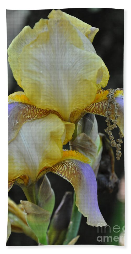 Iris Beach Towel featuring the photograph Iris Beauty by Terry Anderson
