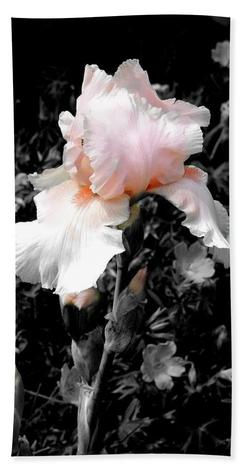 Flower Beach Towel featuring the photograph Iris Emergance by Steve Karol