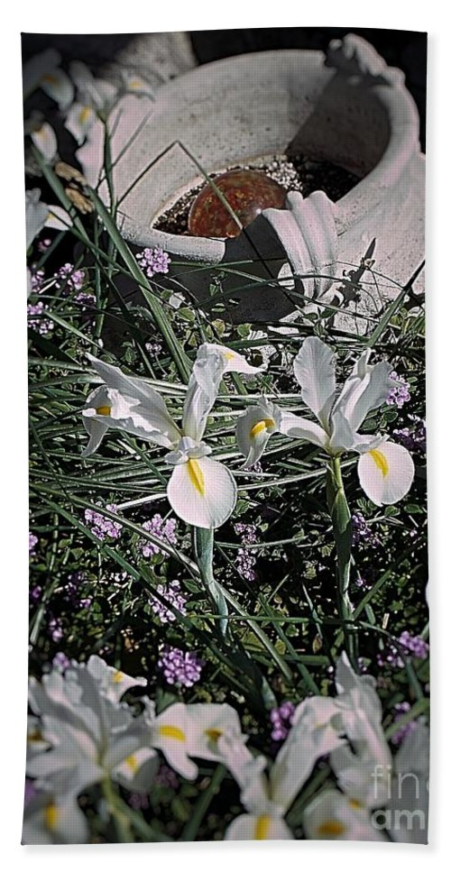 Spring Flower In A Bed Of Lantana Beach Towel featuring the photograph Iris by Thomas Dudas