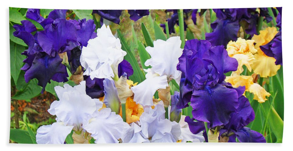 Iris Beach Towel featuring the photograph Irises Flowers Garden Botanical Art Prints Baslee Troutman by Baslee Troutman