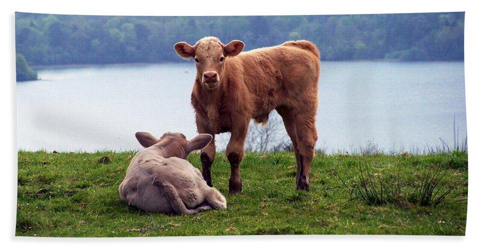 Ireland Beach Towel featuring the photograph Irish Calves At Lough Eske by Teresa Mucha