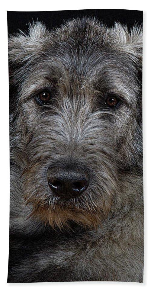 Irish Wolfhound Beach Towel featuring the photograph Irish Wolfhound Droc Vi by Agustin Uzarraga