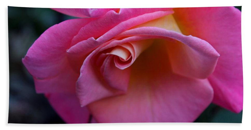 Rose Beach Towel featuring the photograph Irresistible by Michiale Schneider