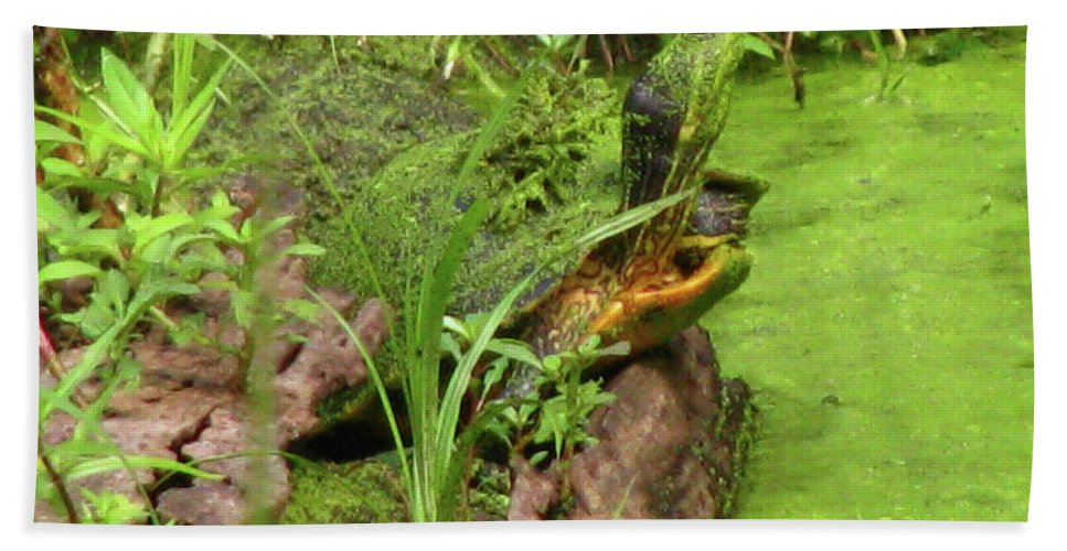 Turtle Beach Towel featuring the photograph Is Green In by Donna Brown