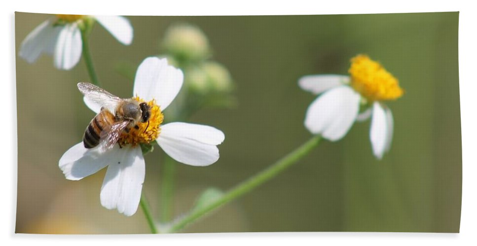 Flowers Beach Towel featuring the photograph Its A Bee's World by Patricia Twardzik