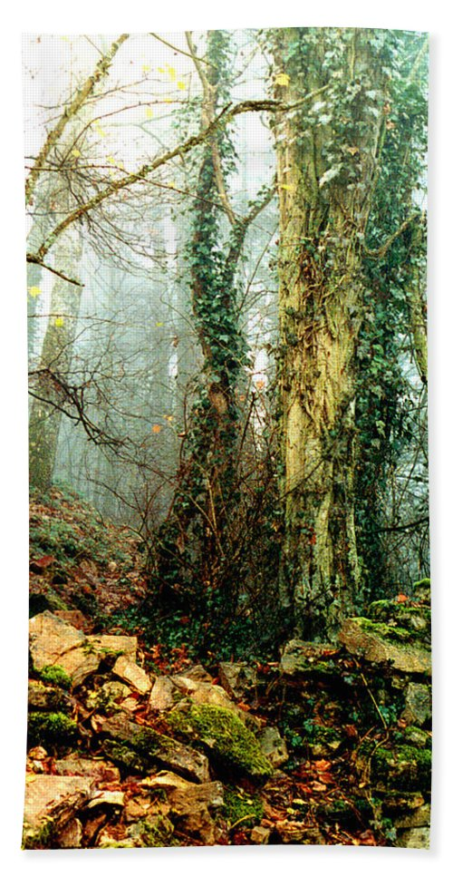 Ivy Beach Towel featuring the photograph Ivy In The Woods by Nancy Mueller