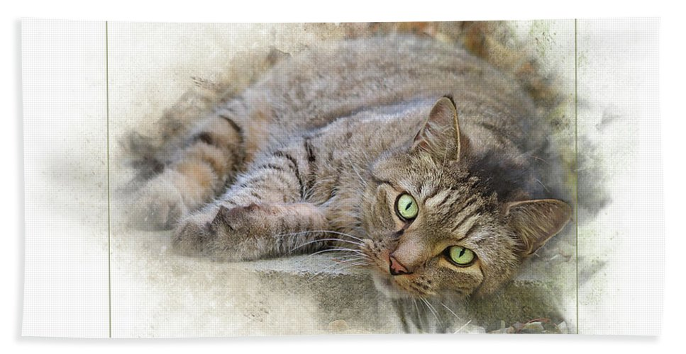 Cat Beach Towel featuring the digital art Jack by Sue Collura