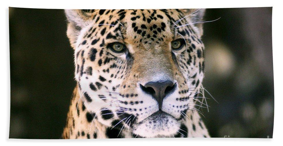 Jaguar Beach Towel featuring the photograph Jaguar by Scott Pellegrin