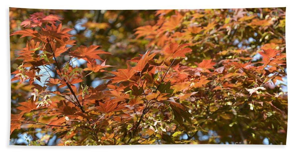 Japanese Maple Beauty Beach Towel featuring the photograph Japanese Maple Beauty by Maria Urso