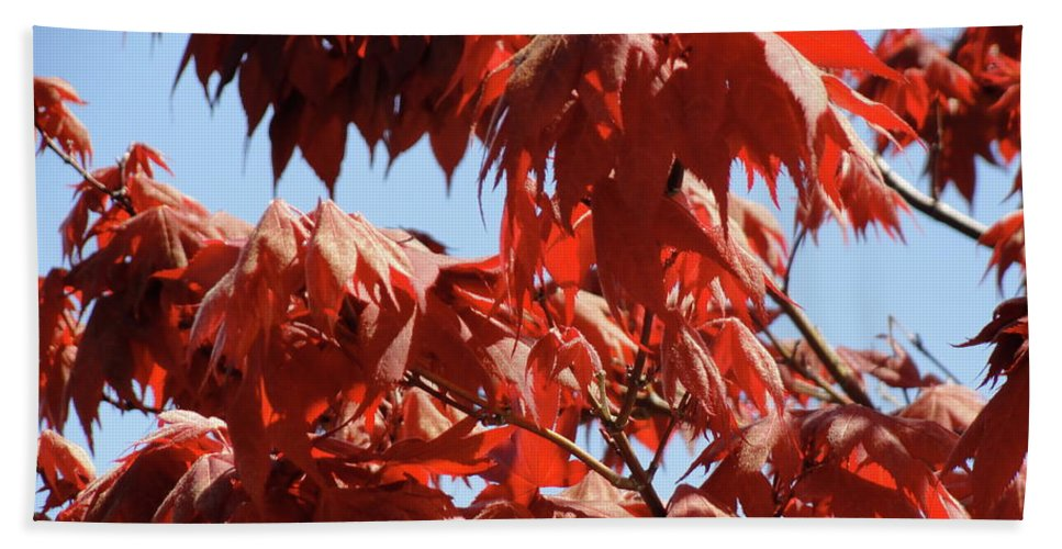 Japanese Maple Beach Towel featuring the photograph Japanese Maple by Shannon Grissom