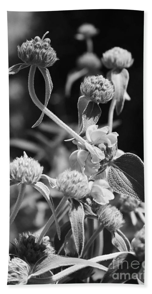 Herbs Beach Sheet featuring the photograph Jerusalem Sage by Kathy McClure
