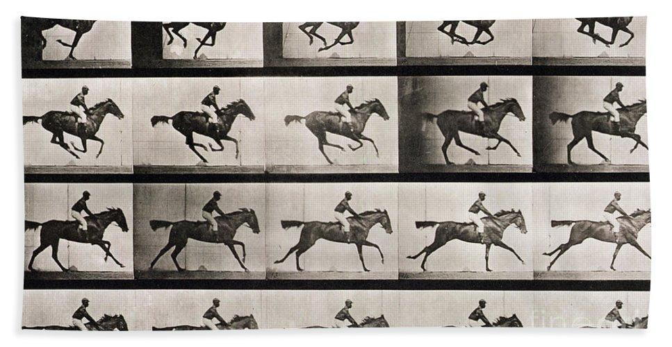 Muybridge Beach Sheet Featuring The Photograph Jockey On A Galloping Horse By Eadweard
