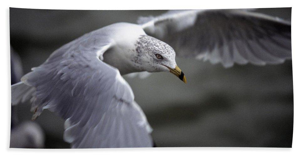 Bird Beach Towel featuring the photograph Johnathan Livingston Seagull by John Harmon