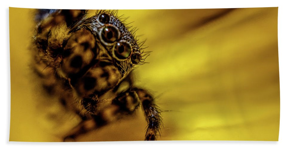 Jumping Spider Beach Towel featuring the photograph Jumping Spider by Lilia D