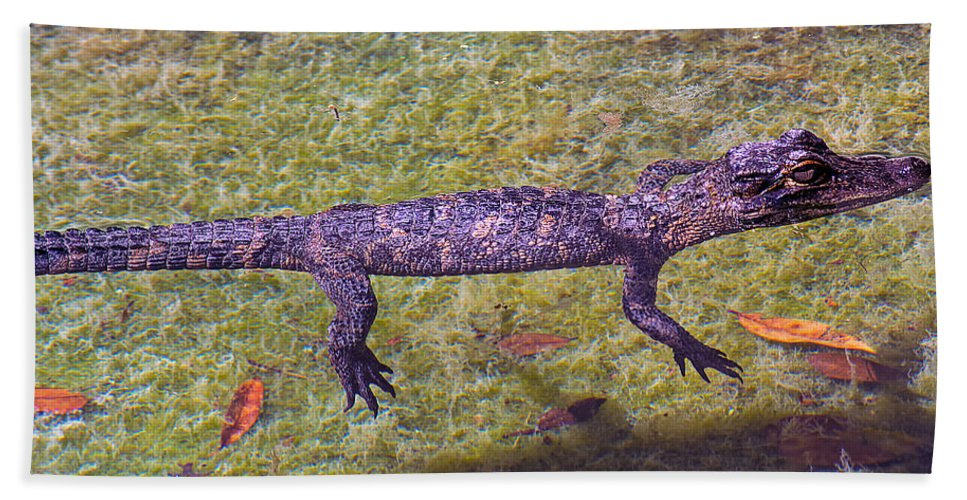 Alligator Beach Towel featuring the photograph Just Drifting Along by Kenneth Albin