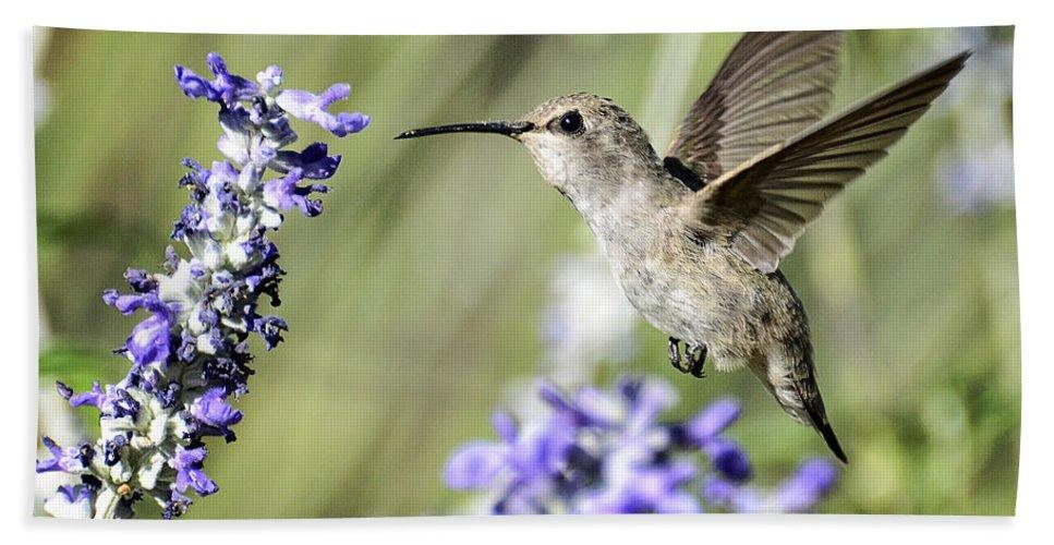 Annas Hummingbird Beach Towel featuring the photograph Just Hovering by Saija Lehtonen