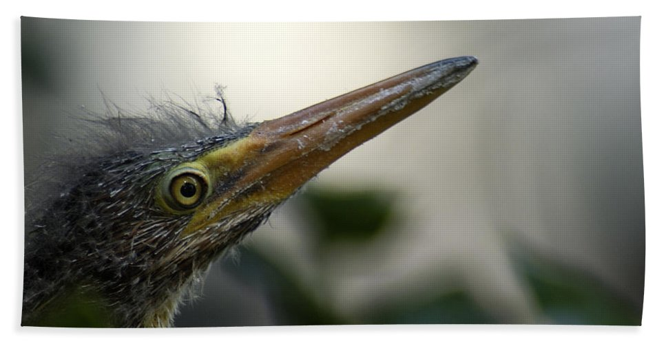 Heron Beach Towel featuring the photograph Just Love Me by D'Arcy Evans