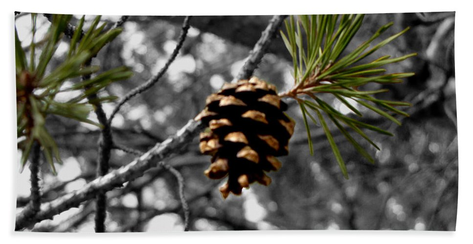 Pine Cone Beach Towel featuring the photograph Just Starting by September Stone