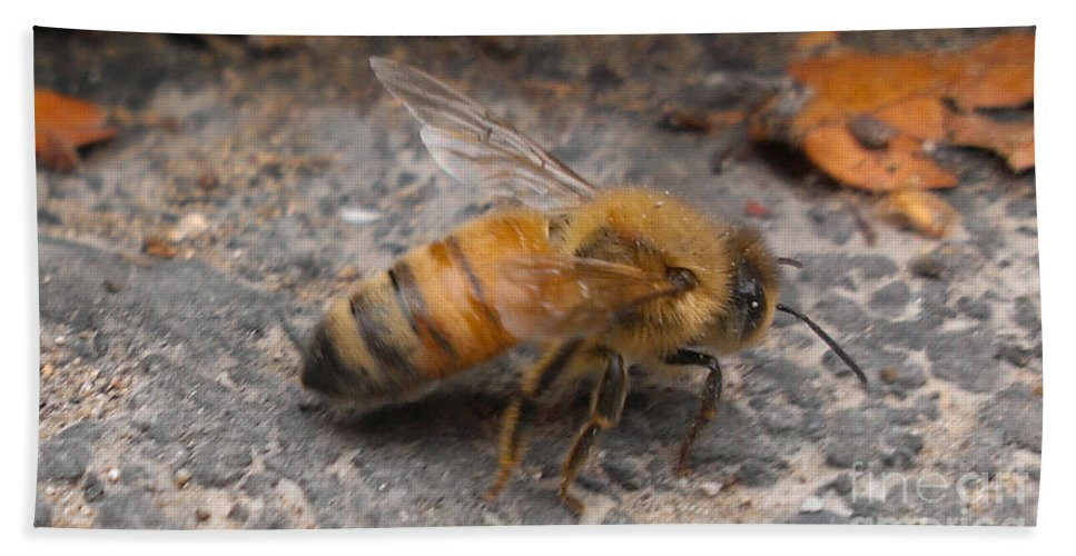 Bee Beach Towel featuring the photograph Just Taking A Stroll by LKB Art and Photography