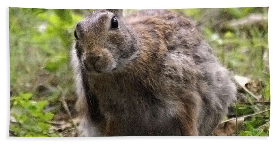 2d Beach Towel featuring the photograph Just Washed My Hare by Brian Wallace
