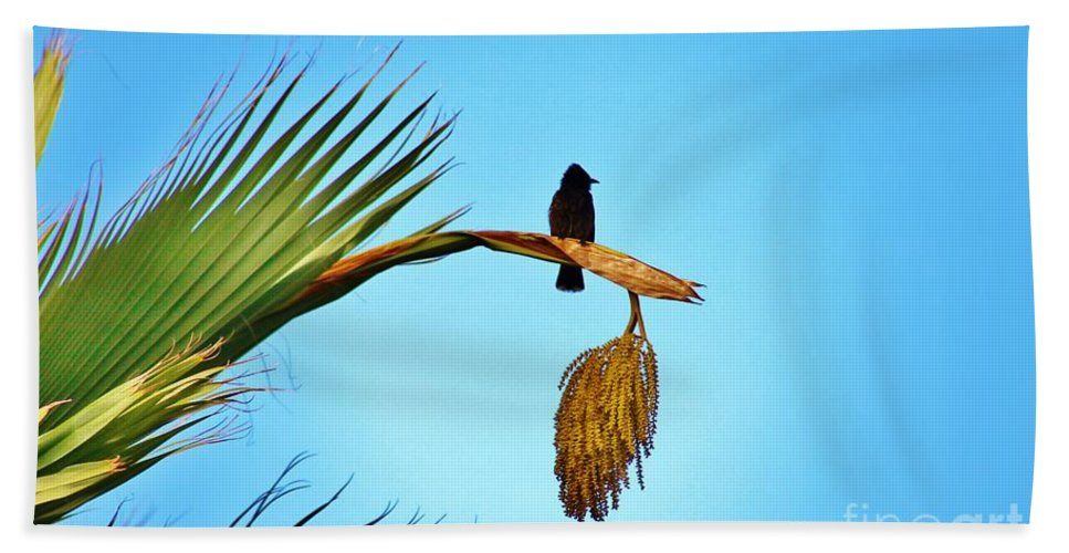Red Vented Bulbul Beach Towel featuring the photograph Juvenile Red Vented Bubbul by Craig Wood