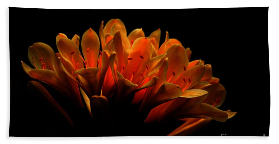 Floral Beach Towel featuring the photograph Kaffir Lily by James Eddy