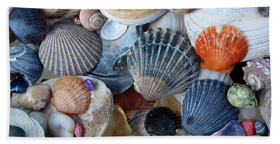 Seashells Beach Towel featuring the photograph Kayla's Shells by John Schneider