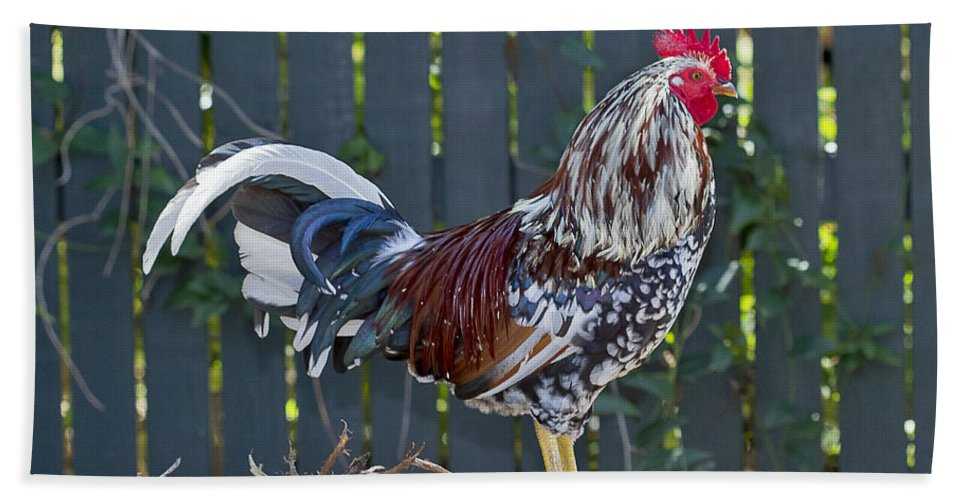 Rooster Beach Towel featuring the photograph Key West Rooster 2 by Bob Slitzan