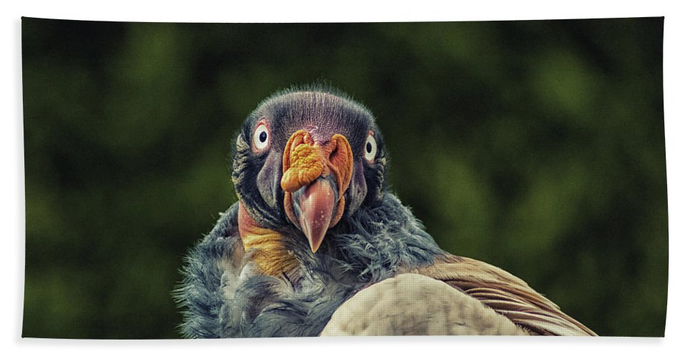 Bird Beach Towel featuring the photograph King Vulture by Martin Newman