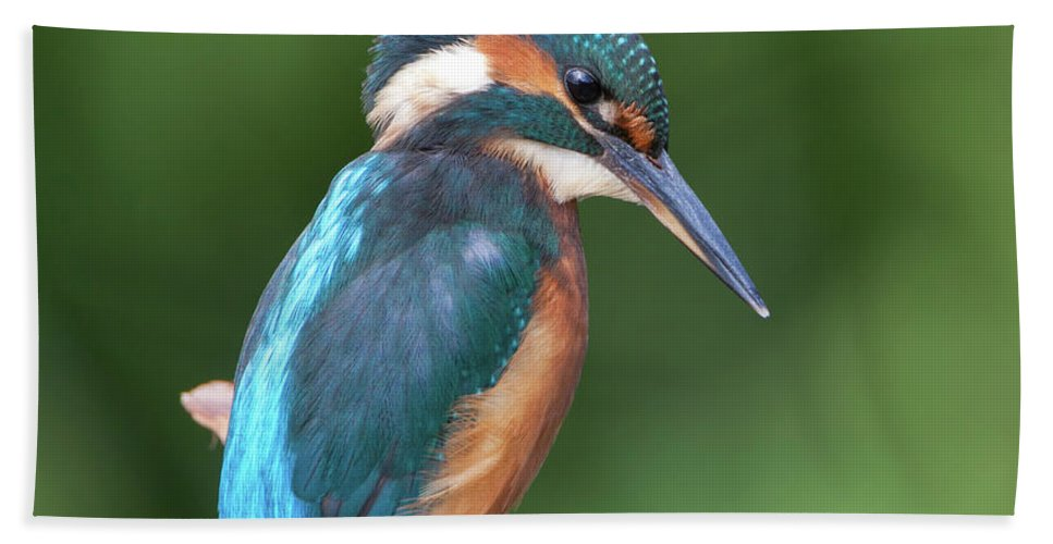 Kingfisher Beach Towel featuring the photograph Kingfisher Watching Below by Peter Walkden