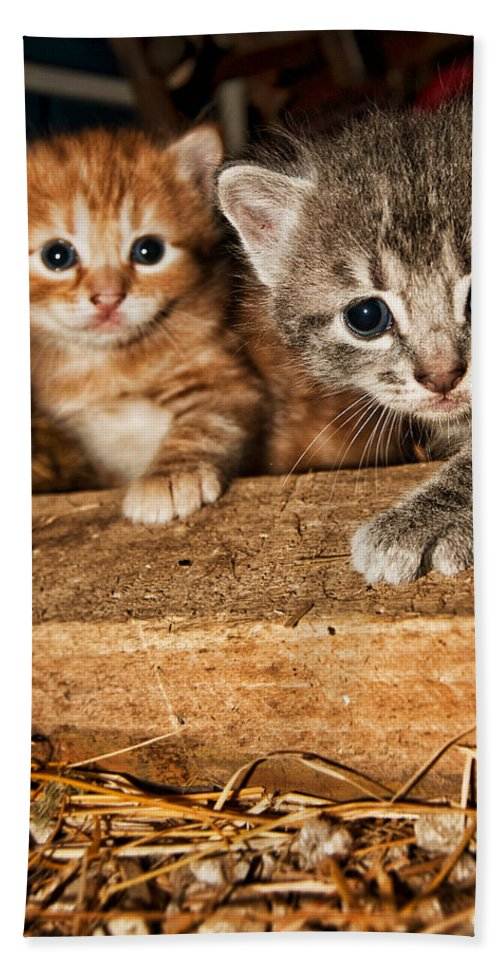 Kittens Beach Towel featuring the photograph Kittens by Amber Flowers