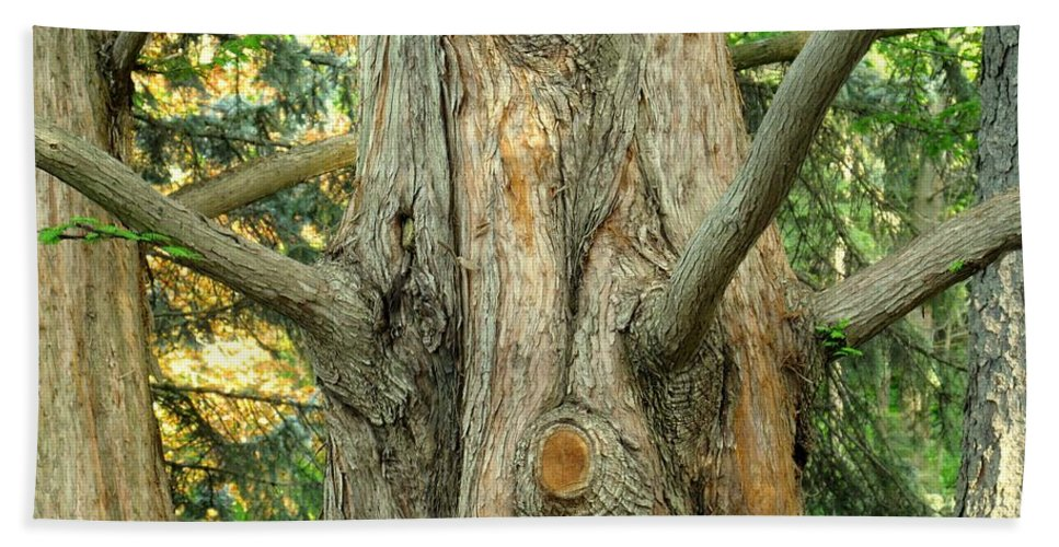 Tree Beach Sheet featuring the photograph Knarled by Ian MacDonald
