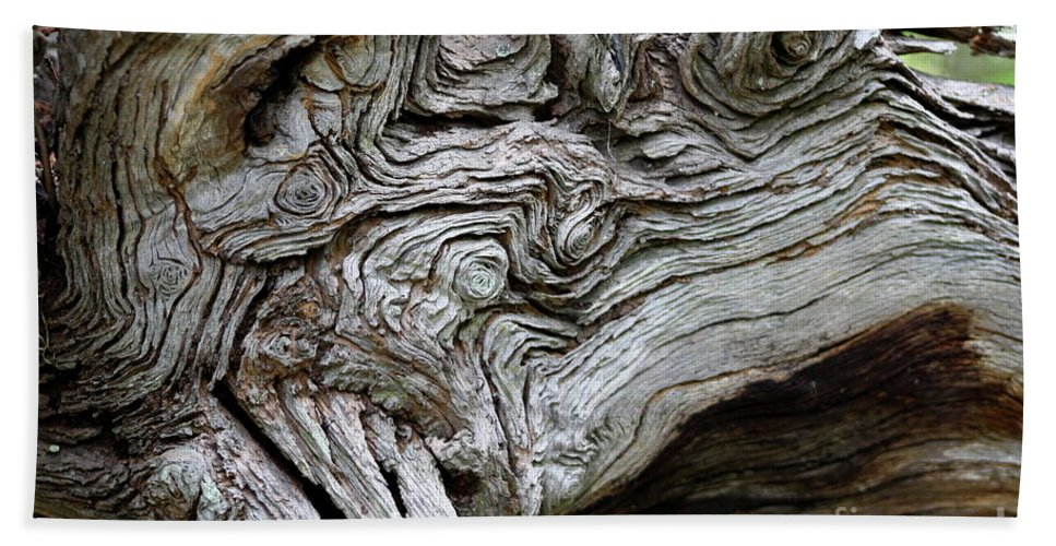 Knotty Tree Beach Towel featuring the photograph Knotty Tree by Christiane Schulze Art And Photography
