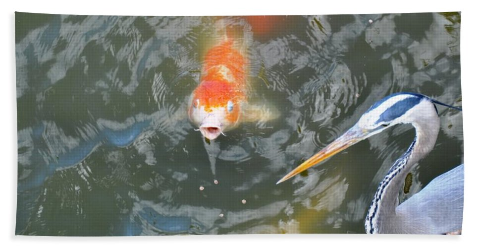Fish Beach Towel featuring the photograph Koi And Great Blue Heron by Rich Bodane