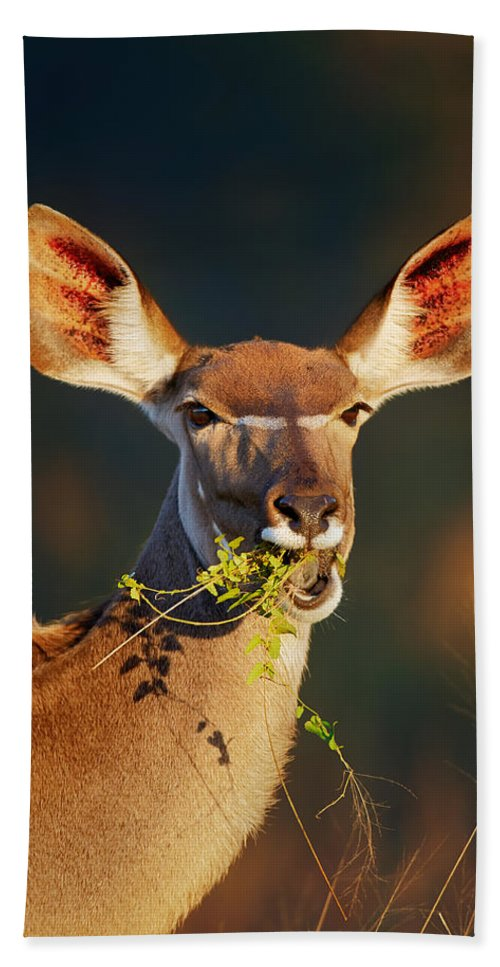 Kudu Beach Towel featuring the photograph Kudu Portrait Eating Green Leaves by Johan Swanepoel