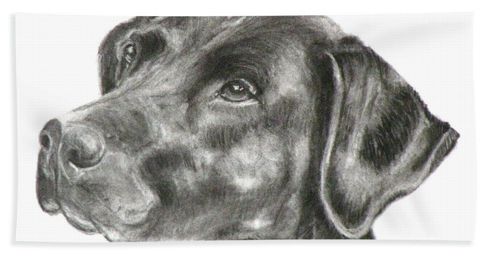 Black Lab Beach Towel featuring the painting Lab Charcoal Drawing by Susan A Becker