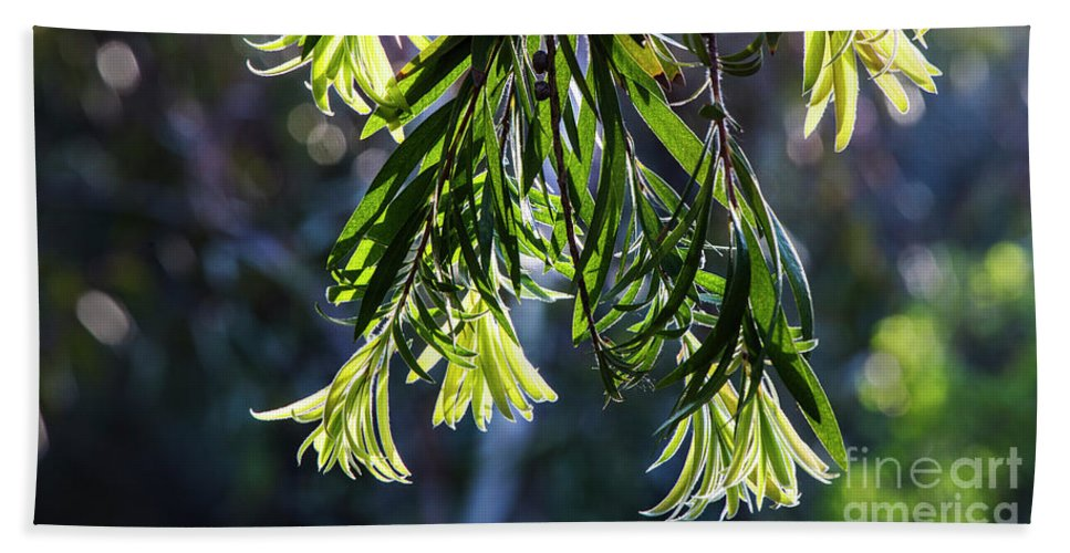 Arboretum Beach Towel featuring the photograph Lacey Leaves by Kathy McClure