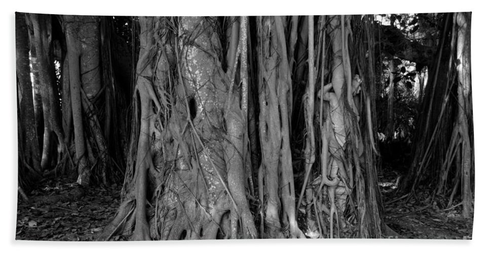 Banyan Trees Beach Towel featuring the photograph Lady In The Banyans by David Lee Thompson