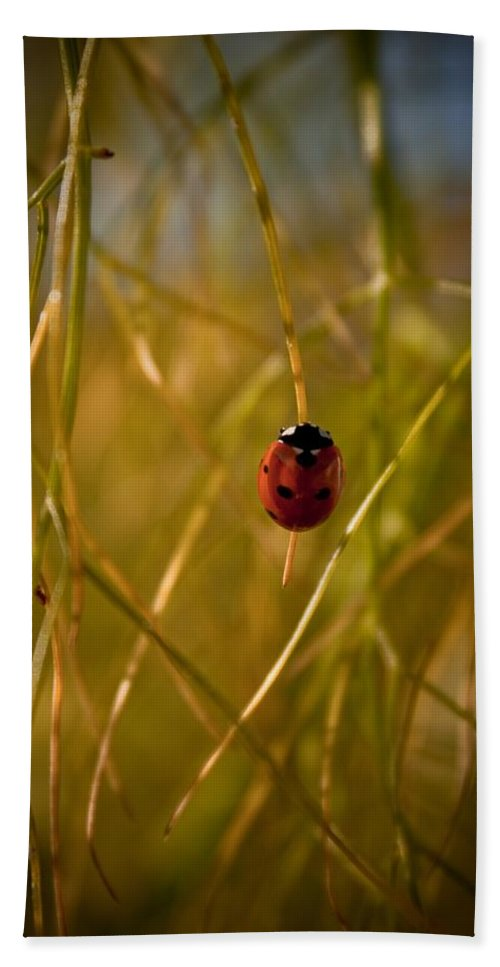 Ladybug Beach Towel featuring the photograph Ladybug by Danielle Silveira