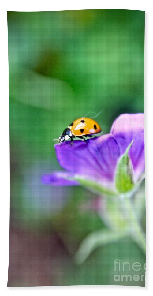 Macro Beach Towel featuring the photograph Ladybug by Elisabeth Derichs