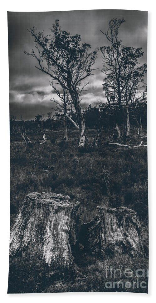 Landscape Of A Dark Creepy Australian Woodland Beach Towel For Sale By Jorgo Photography Wall Art Gallery