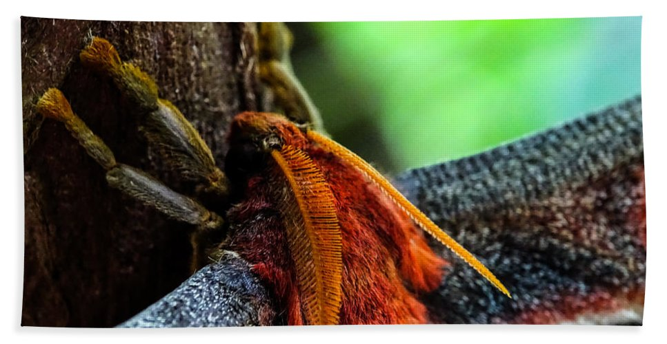 Butterfly Beach Towel featuring the photograph Large Moth Macro by Lilia D