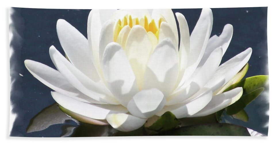 Water Lily Beach Towel featuring the photograph Large Water Lily With White Border by Carol Groenen
