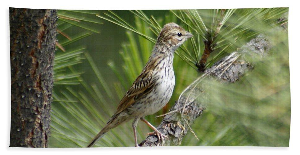Spokane Beach Towel featuring the photograph Lark Sparrow by Ben Upham III