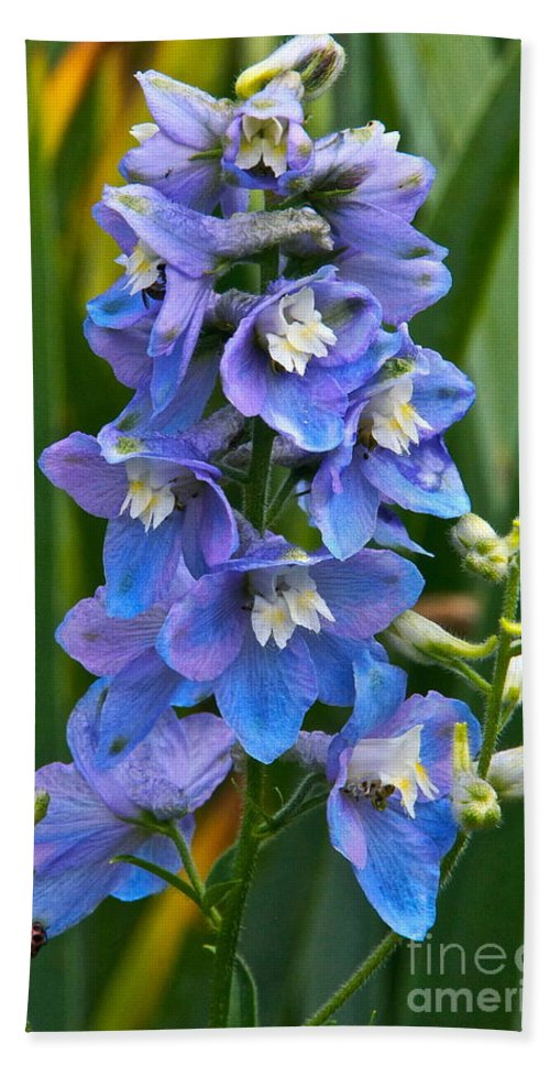 Larkspur Beach Towel featuring the photograph Larkspur And Lady Friend by Byron Varvarigos
