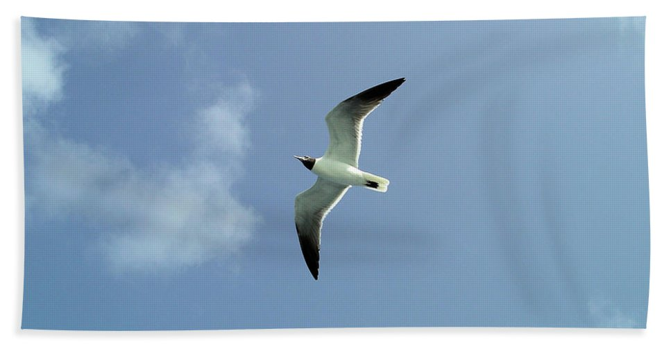 Bird Beach Towel featuring the photograph Laughing Gull by Rich Bodane