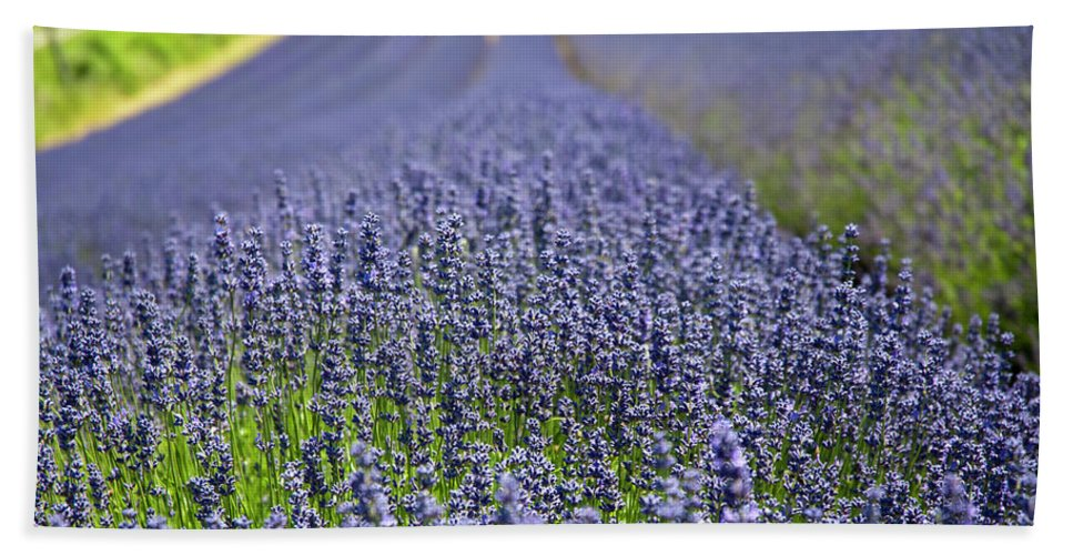 Lavender Beach Towel featuring the photograph Lavender Dreams by Bonnita Moaby