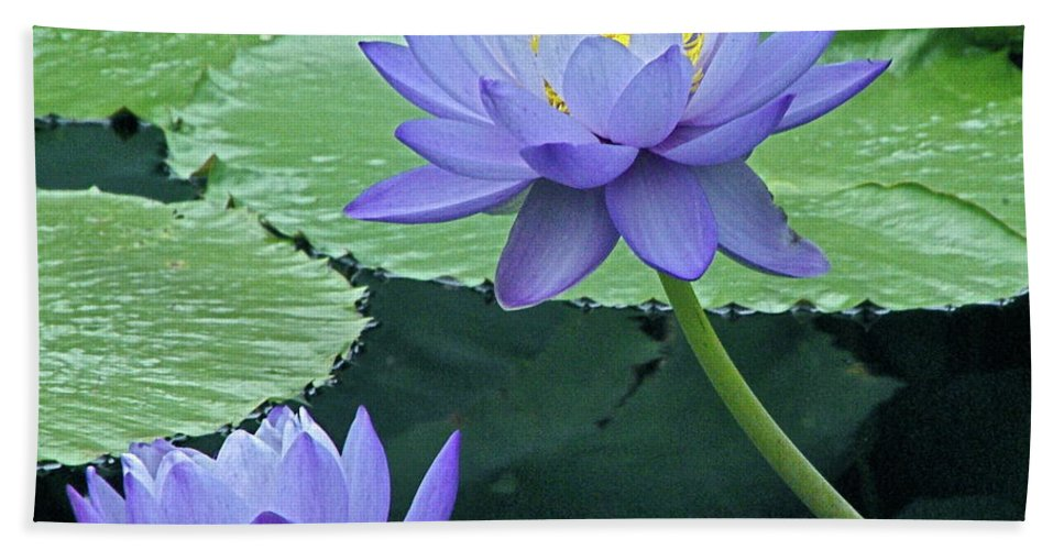 Water Beach Towel featuring the photograph Lavender Enchantment by Byron Varvarigos